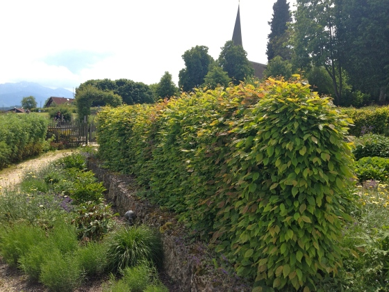 I've never seen more hornbeam hedges in my life than here in Bavaria.